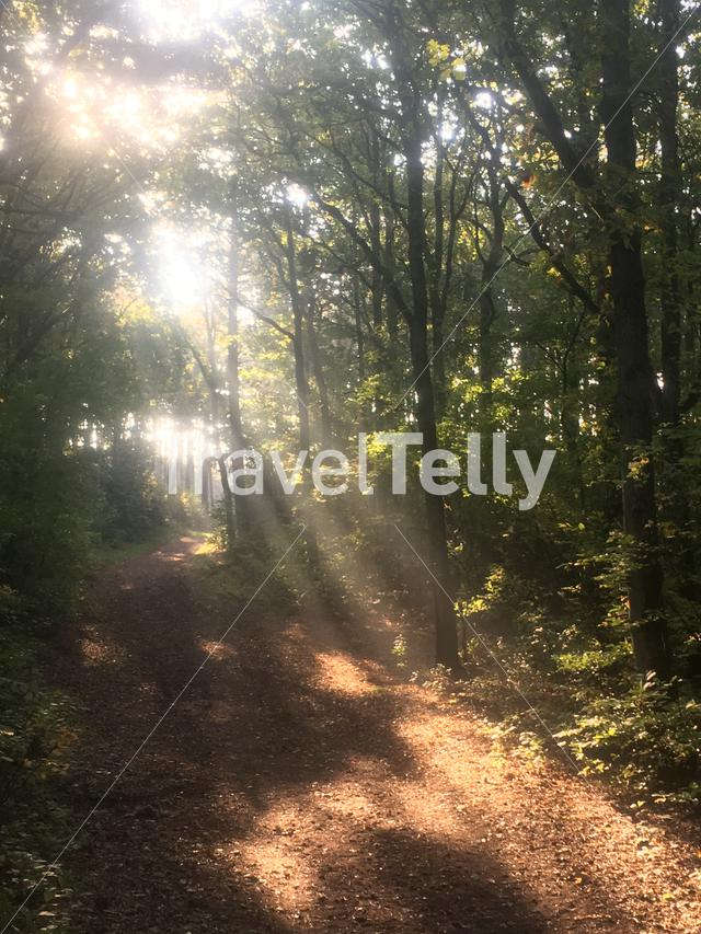 Sun shining through the forest on Terschelling island in The Netherlands