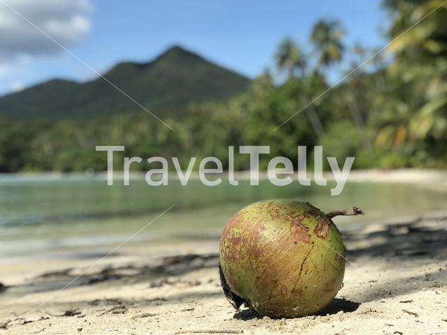 Coconut on Long Beach at Koh Chang Island in Thailand