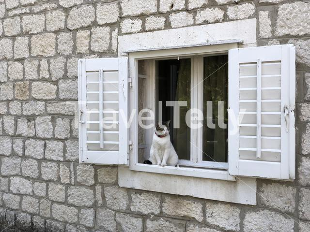 Cat relaxing in a window of the old town of Trogir, Croatia