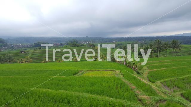 Paddy fields in Bali, Indonesia