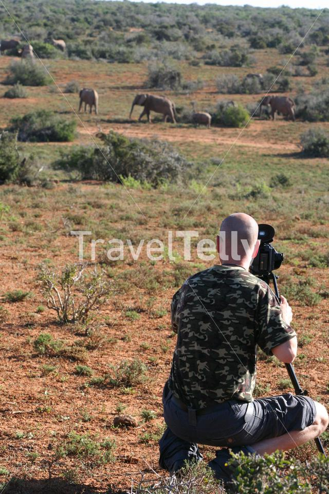 Cameraman filming a herd of elephants in South Africa