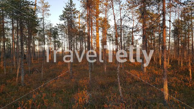 Forest of Patvinsuo National Park Finland