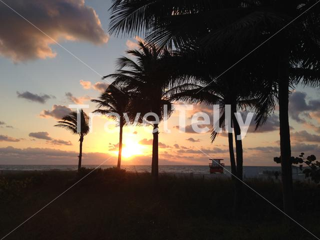 Sunset at Miami Beach with palmtrees and lifeguard house