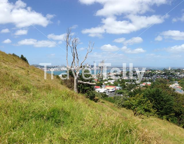 Auckland skyline with a tree at Mount Victoria