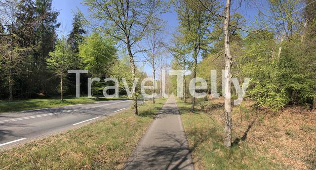 Road through the forest around Ommen in The Netherlands