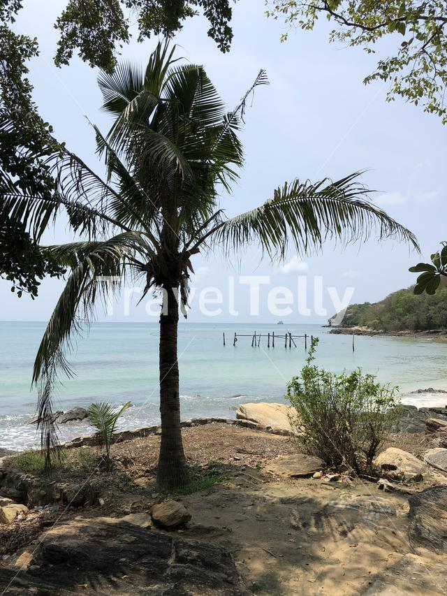 Palm tree along the coast of Koh Samed island in Thailand