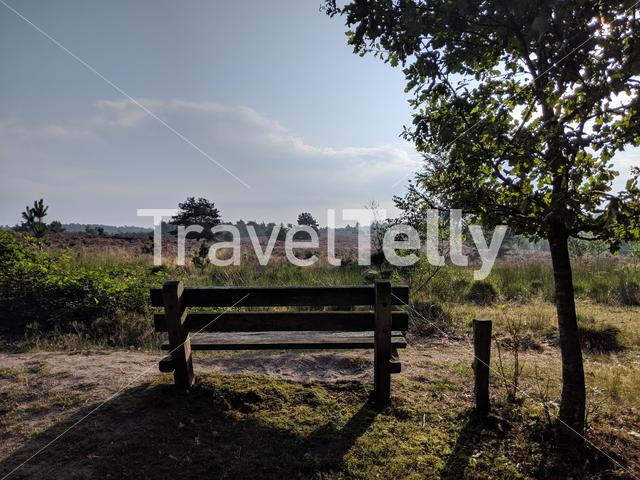 Bench at the National Park Sallandse Heuvelrug in The Netherlands