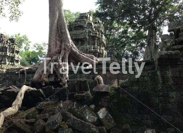 Trees rise from the ruins of this iconic 12th-century Buddhist temple Ta Prohm