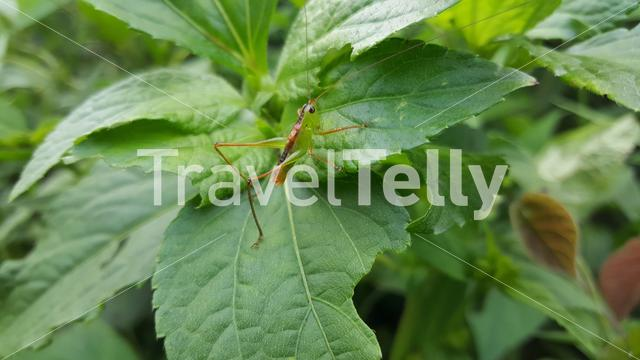 Insect in the forest around mount Kloto in Togo