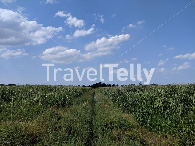 Farmland around Oldetrijne in Friesland The Netherlands