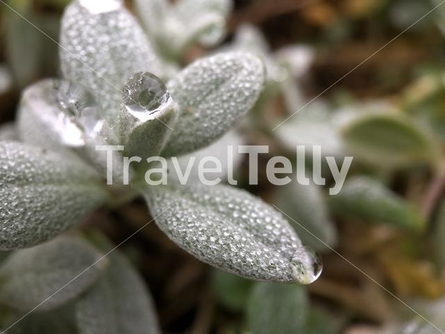 Macro shot from a raindrop on a plant