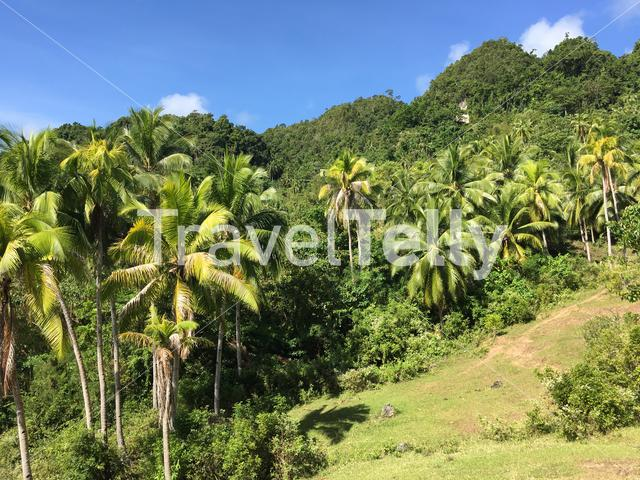 Farm land in the hills of Anda Bohol the Philippines