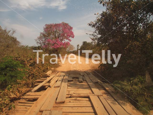One of the bridges on the way to porto Jofre on the transpantaneira road in the Pantanal Brazil
