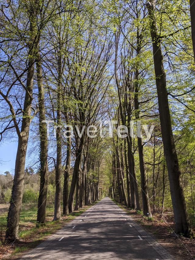 Road through the forest around Vorden during spring in Gelderland, The Netherlands
