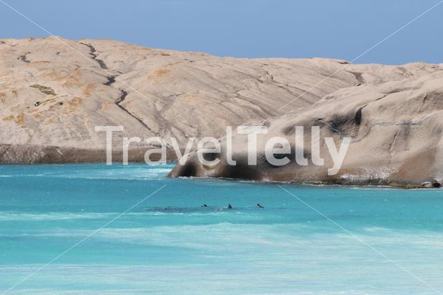 Dolphins at Twilight Beach in Esperance Western Australia