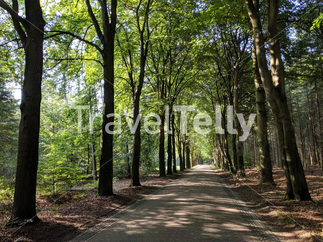 Road through the forest of Exel in Gelderland, The Netherlands