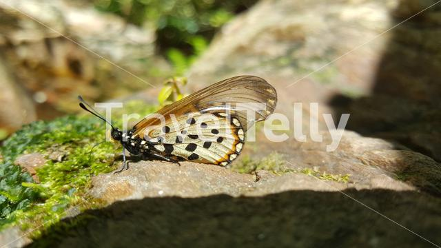 Butterfly on a rock at Baviaanskloof Mega Reserve in South Africa