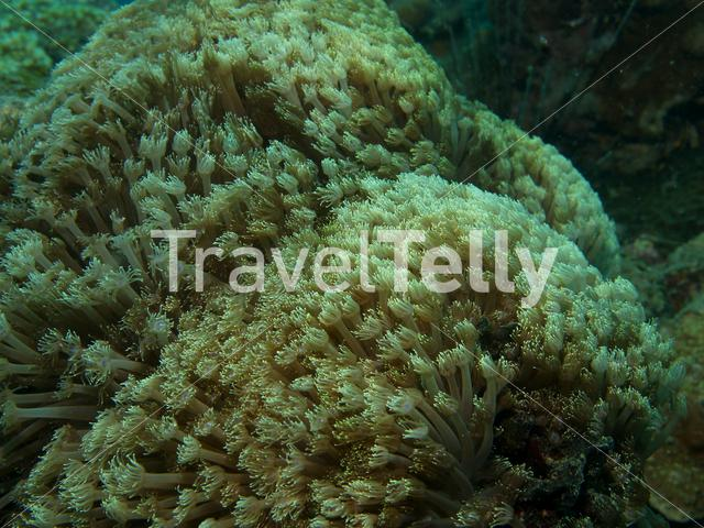 Soft coral in Ko Chang Thailand