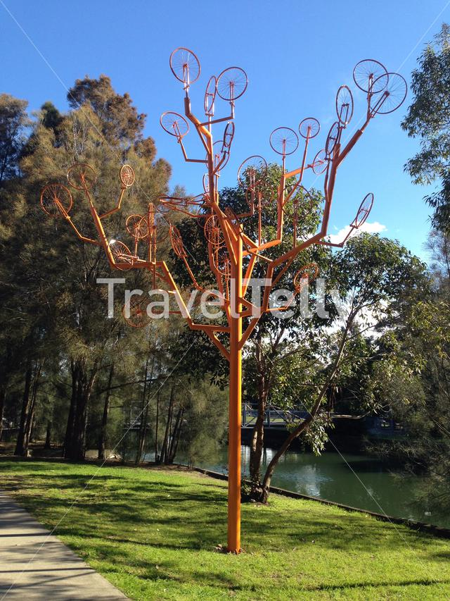 Orange (Dutch ;-)) cycle tree in Sydney