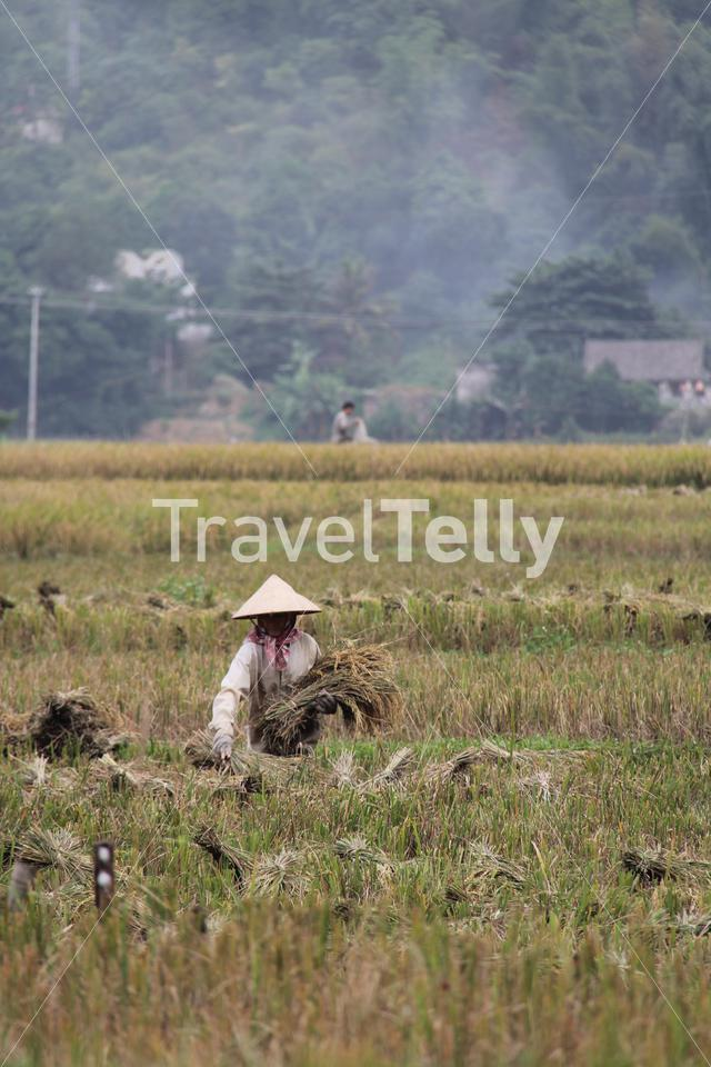 Farmers working at the farmland in Mai Chau Vietnam
