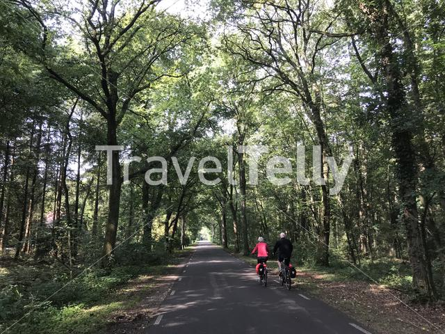 Cycling through the forest of Drenthe The Netherlands