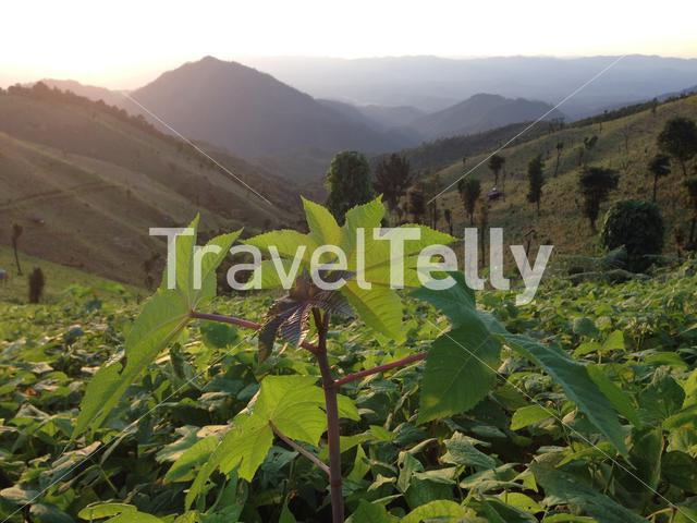 Farming mountain landscape in the hills of Northern Thailand