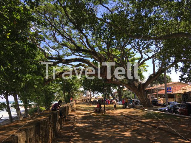 Trees at Fort Galle in Sri Lanka