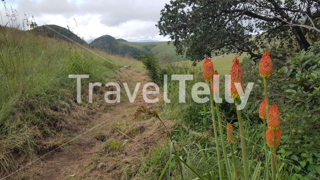 Hiking path at Malolotja National Park a Nature preserve in Swaziland