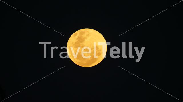 Yellow full moon at night in Africa