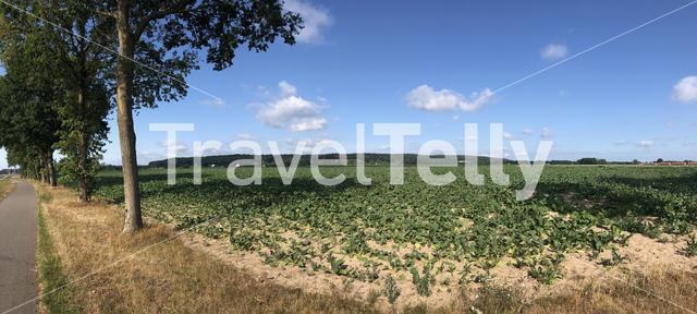 Panoramic landscape around Braamt in Gelderland, The Netherlands