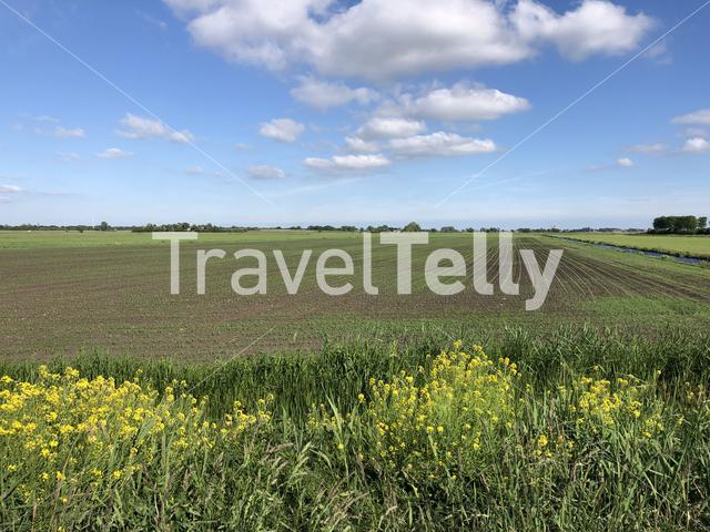 Landscape from farmland in Friesland The Netherlands