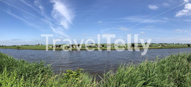 Panorama from cows next to a canal around Parrega, The Netherlands