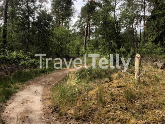 MTB route sign and forest around Ommen in Overijssel The Netherlands