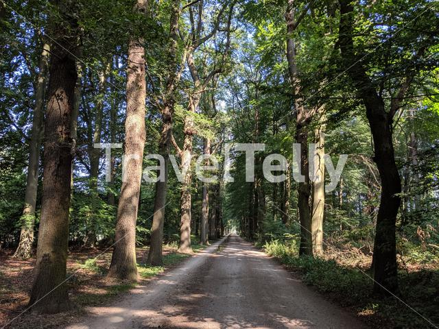 Road around castle Weldam in Overijssel The Netherlands