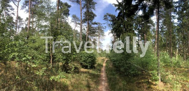 MTB route and forest panorama around Ommen in Overijssel The Netherlands
