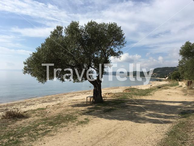 Tree with a bench at the beach in Greece