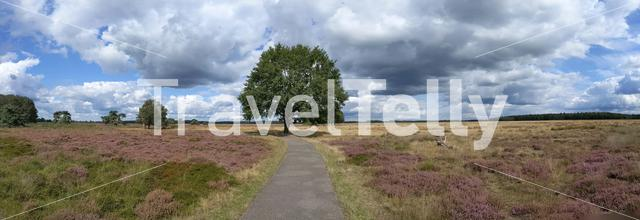 Panoramic landscape from a nature reserve around Hijken in Drenthe, The Netherlands