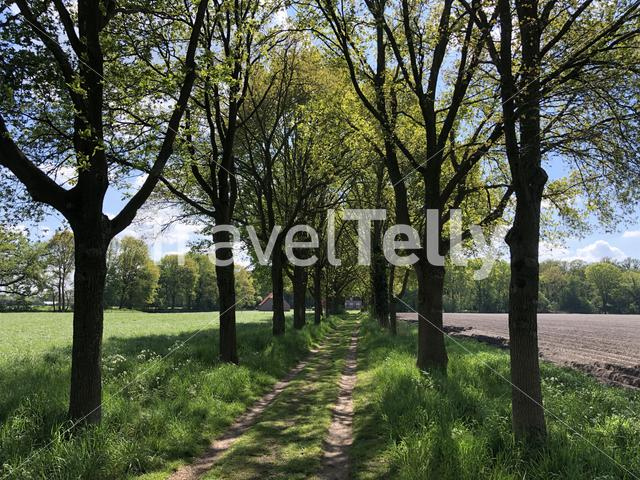 Path around Ruurlo castle in Gelderland, The Netherlands