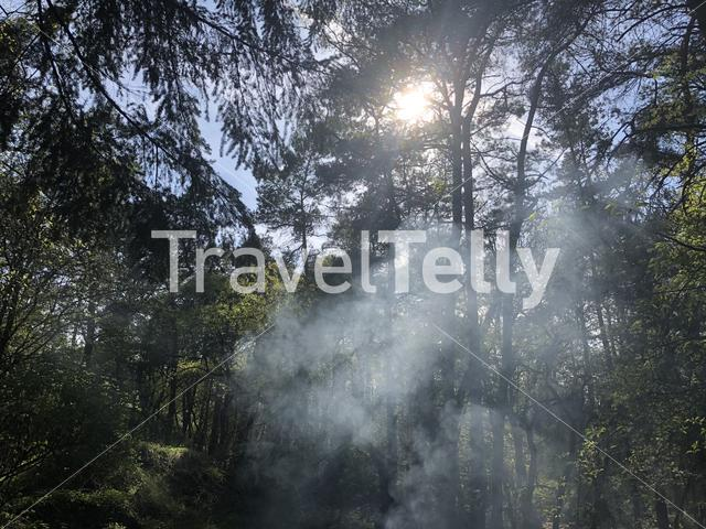 Sunlight shining through a tree in the forest at the National park Sallandse heuvelrug in Overijssel, The Netherlands