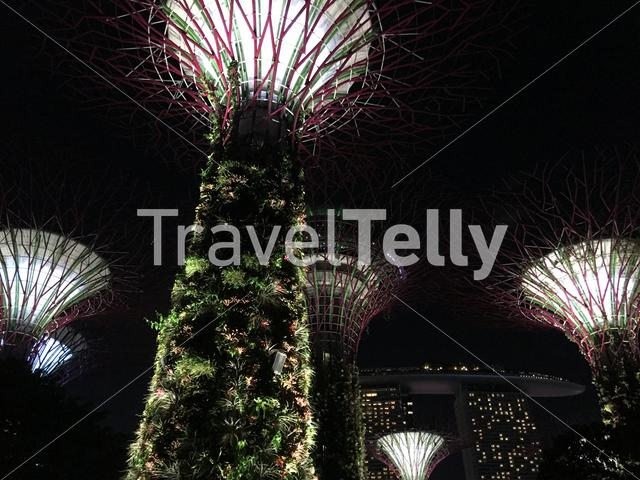 Supertree Grove with lights at Gardens by the Bay in Singapore