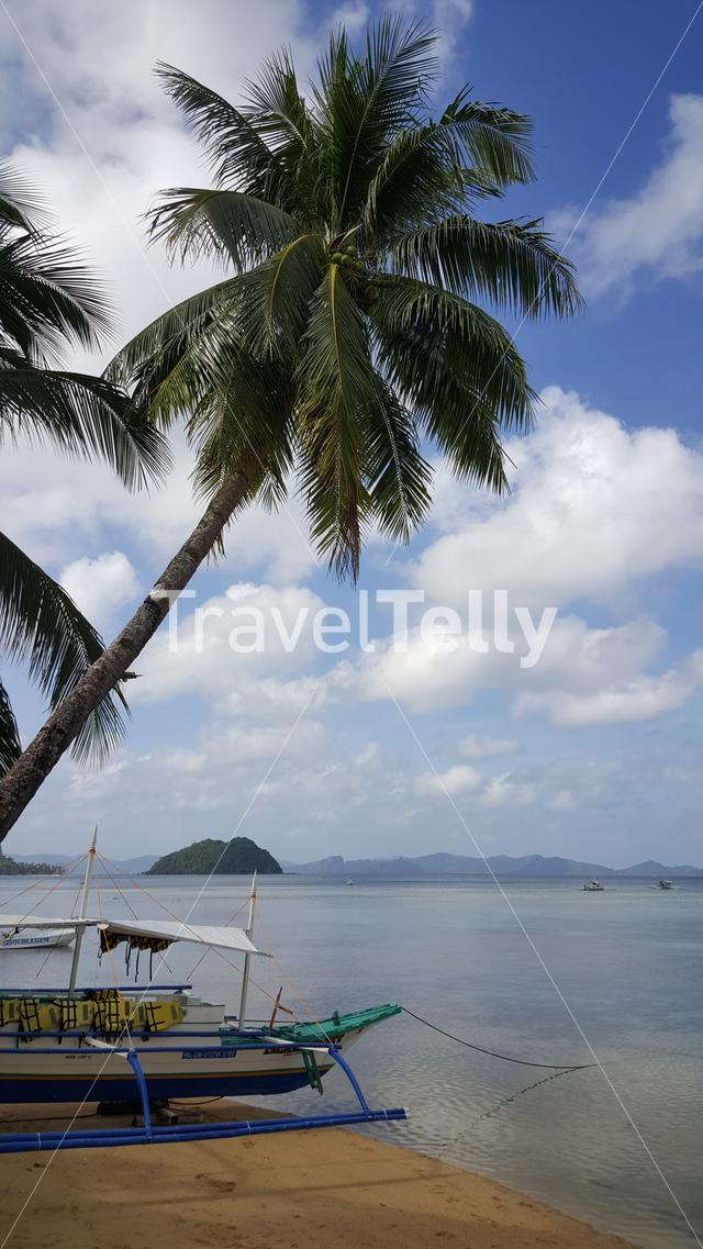 Coconut trees at El Nido beach, Palawan, Philipinnes