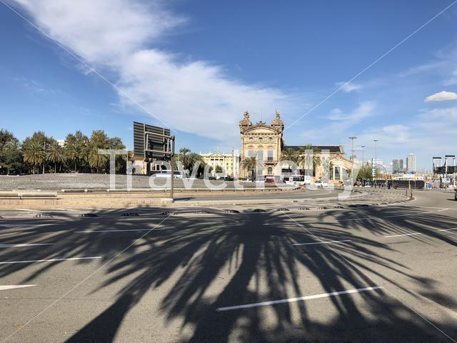 Palm trees shadow at Plaza de les Drassanes roundabout in Barcelona Spain