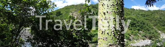 Panorama landscape with the Silk floss tree in the Cañón de Somoto in Nicaragua