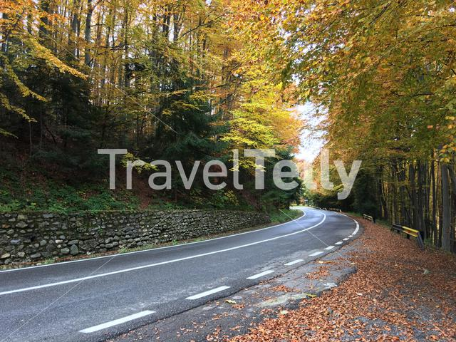 Autumn forest at the Transfagarasan pass in Romania