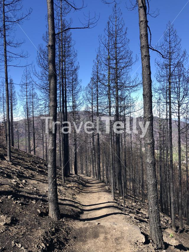 Hiking path through burned forest on Gran Canaria