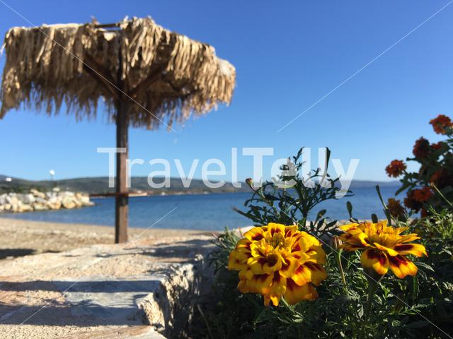 Yellow marigold with a parasol at the background in Kato Gatzea