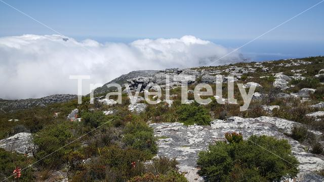 Clouds at the table Mountain national park in South Africa