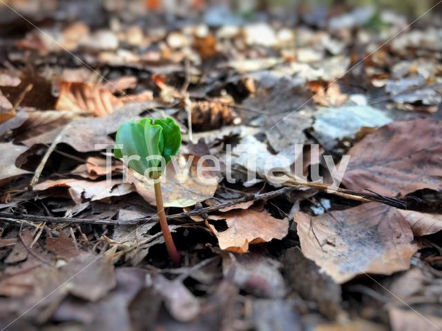 New life through old leaves