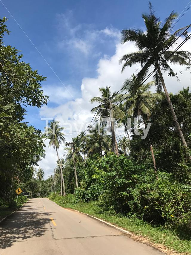 Palmtrees along the road in Koh Chang Thailand
