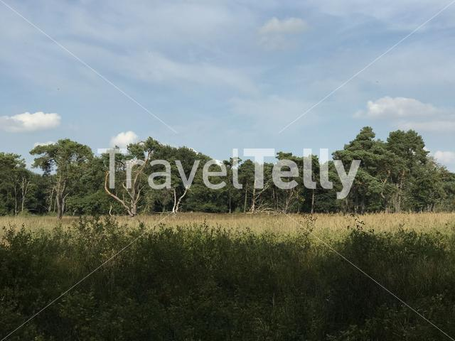 Forest in Drenthe The Netherlands